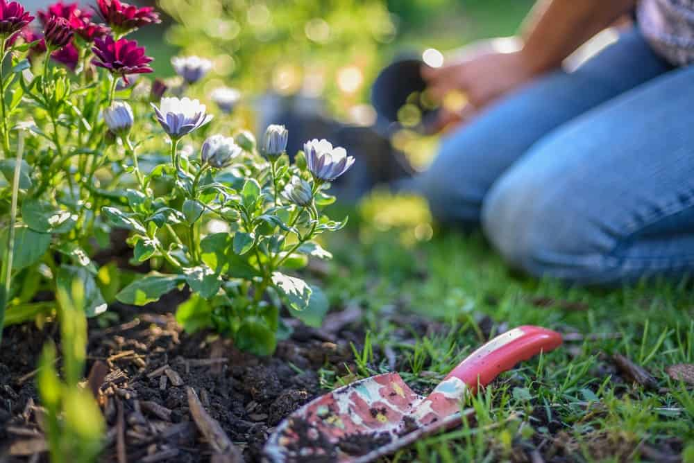 Don't Want to Spend Your Summers Taking Care of the Yard? Try These Simple Hacks