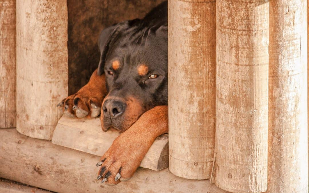 Best DIY Dog House Plans for Your Pup